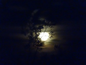 22014_moon_rising