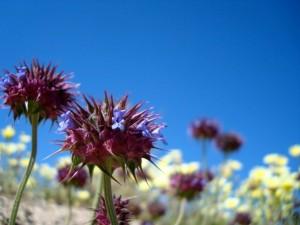 desert_flowers_up_close